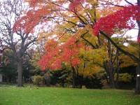 北海道の紅葉は「赤」が特徴