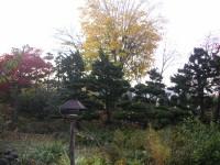 晩秋の庭の餌台