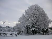 当別・雪の大澤の庭