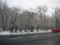 植物園も冬に逆戻り