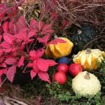 紅葉と南瓜
