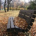 落葉をためて人待ち顔のベンチ