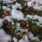 地面の雪の中から顔をだしたエゾノコリンゴ