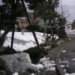 豪雪を乗り切った木々