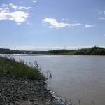 鮭の溯る沙流川