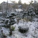 冬囲いの追いつかない庭