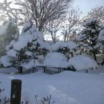 2本のオンコの木も雪まみれ