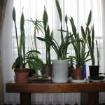 越冬中のアパートの鉢植