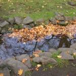 空を映している小川と落ち葉