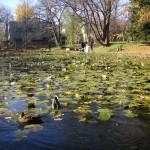 北大構内の大野池