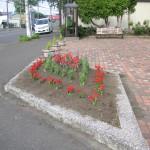 ポケットパークの花壇完成