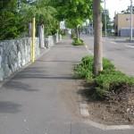 すっきりした白樺町内会の街路