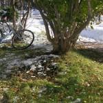 忘れられた自転車