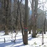 積雪の目印テープ