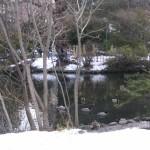 道庁の池のおしどりたち