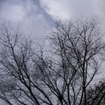 小枝に小鳥がいっぱい