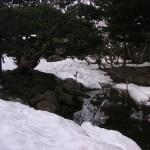 庭の雪解け