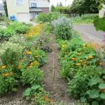ガーデン花盛り