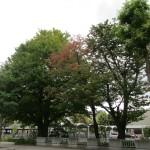 紅葉しはじめた街路樹