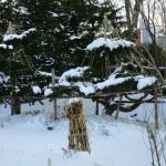 庭の雪吊り完成