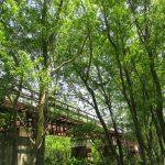 河川敷緑地から金沢鉄橋