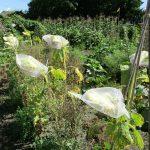 鳥や虫から種を護るネット