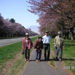 2009年5月.静内の桜