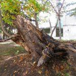 巨大な朽ち木の根元