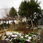 藤棚の雪も落ちました